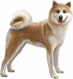 秋田犬【日本】
