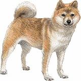 柴犬【日本】