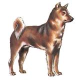 紀州犬【日本】