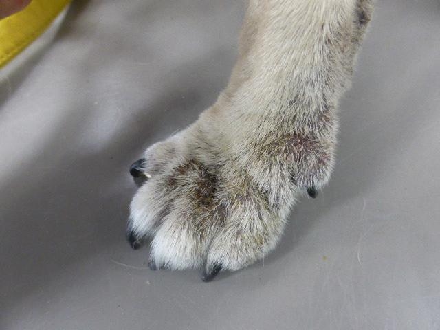 趾間肢端皮膚炎