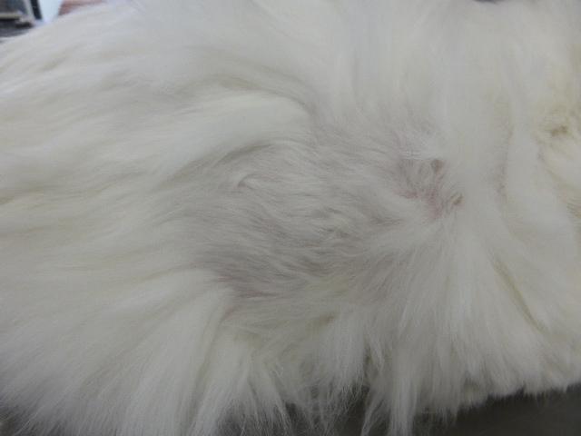 猫のアトピー性皮膚炎 1ヶ月後