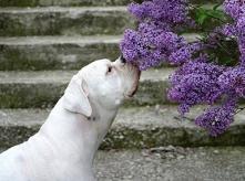 犬猫のアトピー・アレルギー・脱毛症・外耳炎・涙やけ等でお困りの方は、あきらめずに皮膚病専門の神戸フランダース犬猫皮膚科動物病院にご相談ください。院長のコラム一般診察・皮膚科サイトメニュー